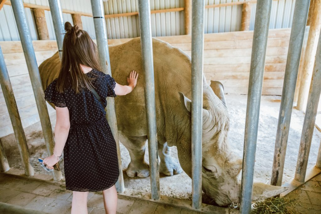 rhino, how to help rhinos, donations for rhinos, rhinos conservation project, rhinos in New Zealand, Hamilton zoo