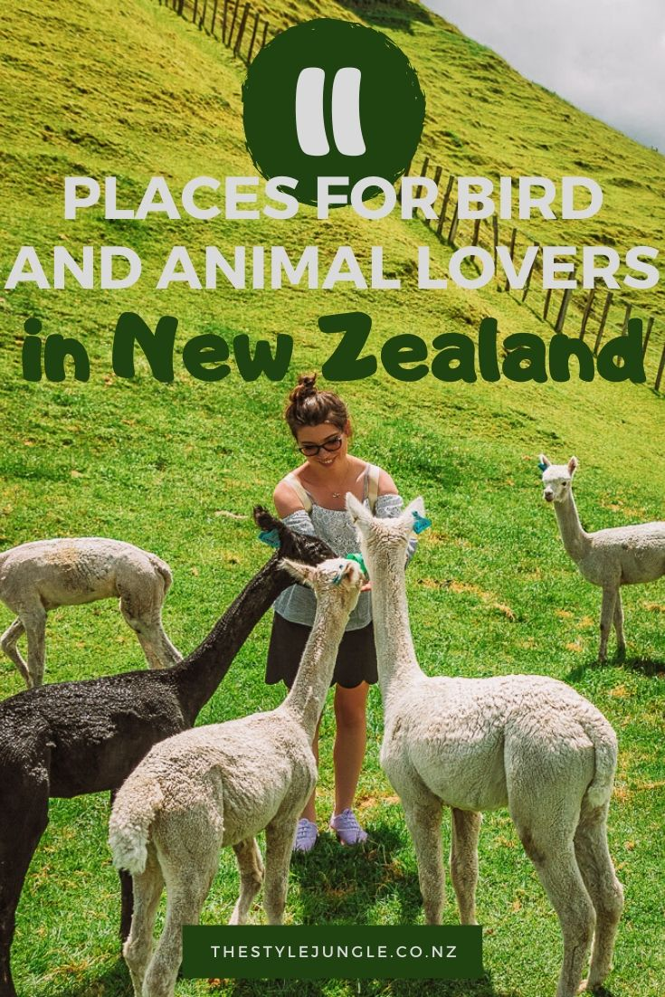 New Zealand is a land of birds and farm animals that live freely and happily. This New Zealand itinerary uncovers all the best spots in New Zealand for bird watching and meeting animals. From gannets on the North Island of New Zealand to seals on the South Island of New Zealand, here are all the best things to do in New Zealand if you enjoy being outdoors and admire wild life. Travel New Zealand and create memories with locals! New Zealand | New Zealand guide | things to do in New Zealand