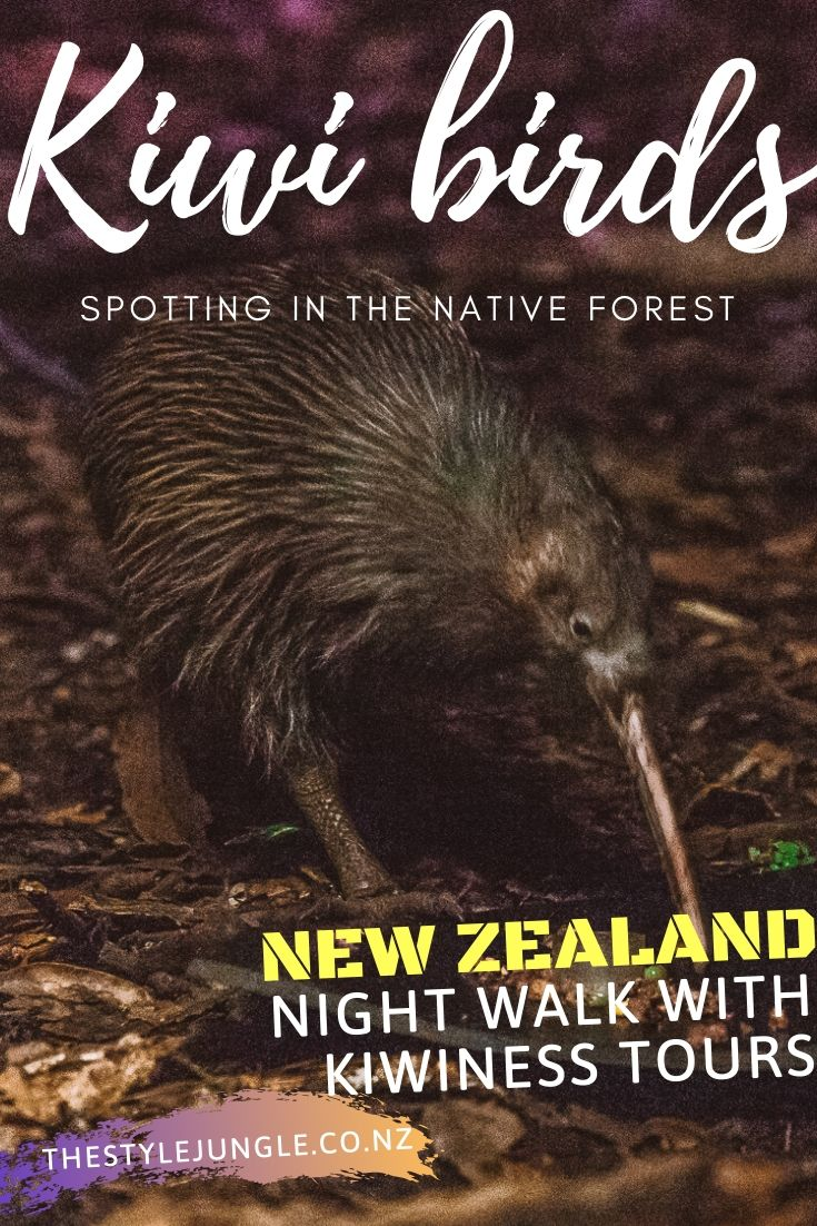 Kiwi birds are a symbol of New Zealand. Unique birds you won't find outside New Zealand. Of course, seeing kiwi bird should be on everyone's New Zealand travel itinerary. Complete your New Zealand must-do list with a walk in a reserve at night to find kiwi birds in the wild. We've joined Kiwiness Tours, operating in North Auckland, New Zealand.  New Zealand guide   things to do in New Zealand   New Zealand photography   New Zealand North Island